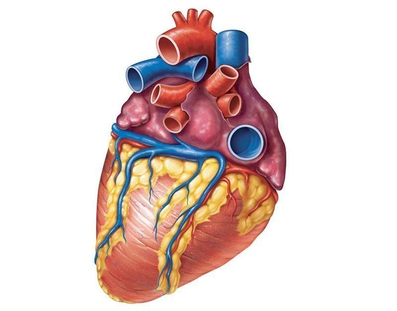 Магнитно-резонансная томография сердца