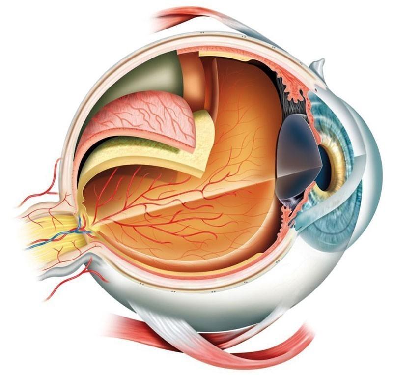 МРТ глаза по доступной цене