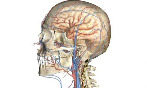 МРТ сосудов головного мозга и шеи от 6 500 рублей