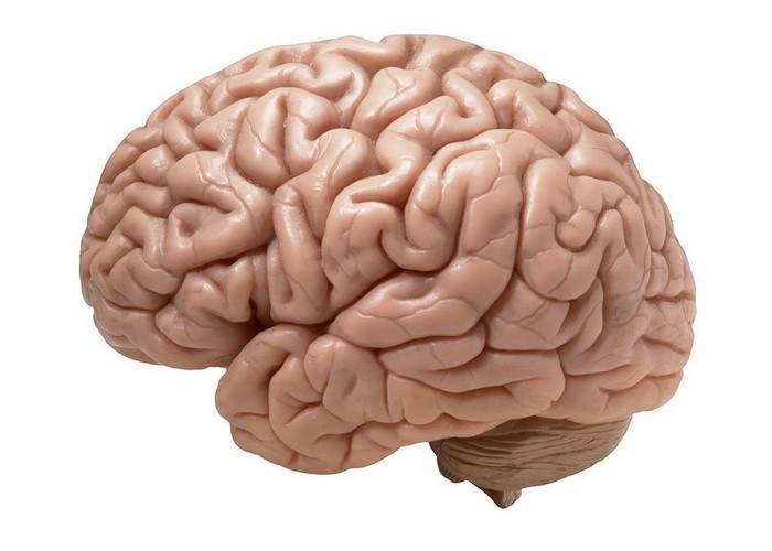 Где пройти МРТ головного мозга?
