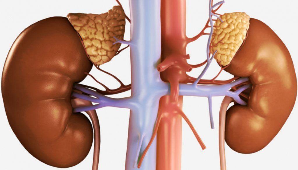 Киста надпочечника — причины, симптомы, диагностика и методы лечения