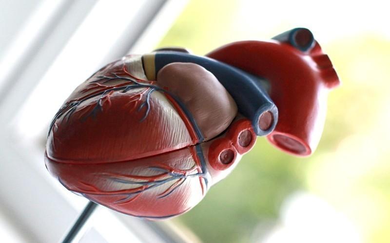 Приобретенные пороки сердца — симптомы, профилактика, лечение заболевания