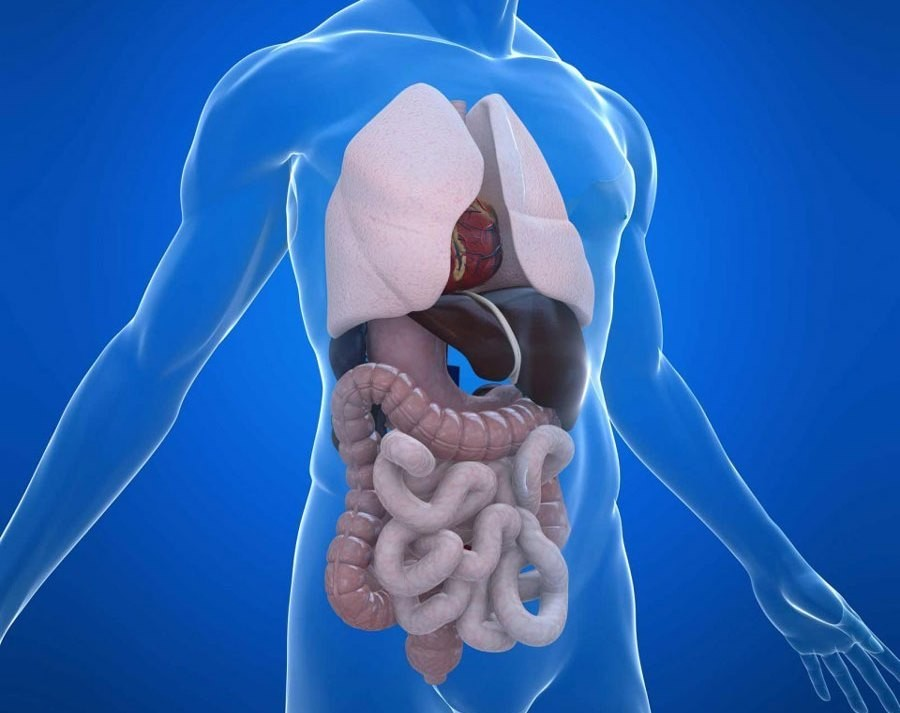 Проведение процедуры МРТ брюшной полости