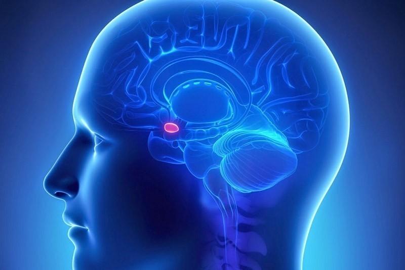 Где можно сделать МРТ гипофиза?