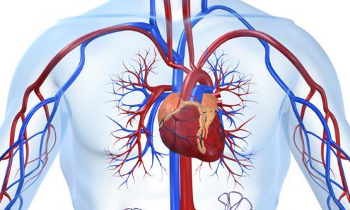 Аневризма аорты сердца — особенности, симптомы, лечение заболевания
