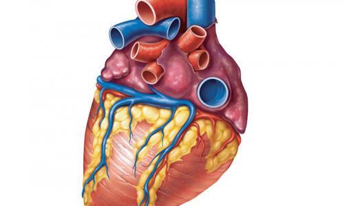Магнитно-резонансная томография сердца от 8 800 рублей